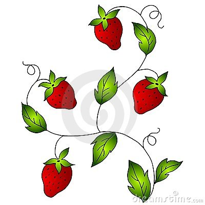 Bright Red Strawberries On Vine Royalty Free Stock Image