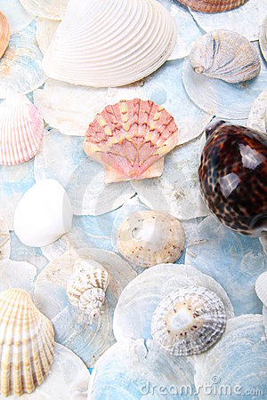 Bright shell selection