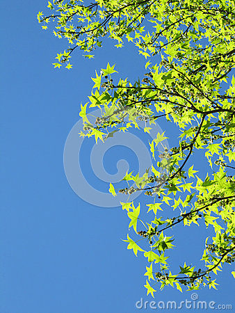 Free Bright Spring Sky With Green Leaves Royalty Free Stock Photography - 26713207