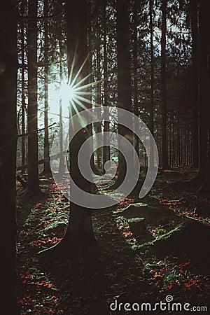 Free Bright Sun Lights Up The Dark Winter Forest, Denmark Stock Image - 136534711