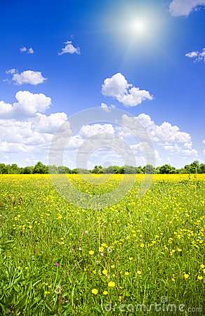 Bright sun over flower meadow.