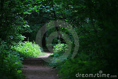 Bright sun shining on path in the forest