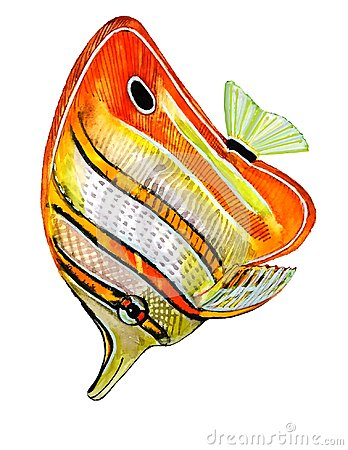 Free Brightly Colored Fish With Orange Stripes With A Black Outline Royalty Free Stock Image - 108716066