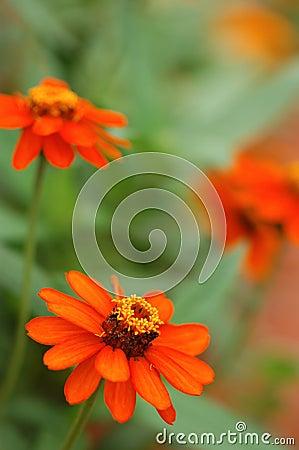 Brightly Orange Flowers
