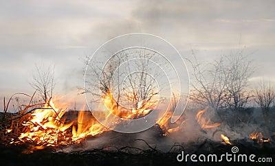 Brightness of fire
