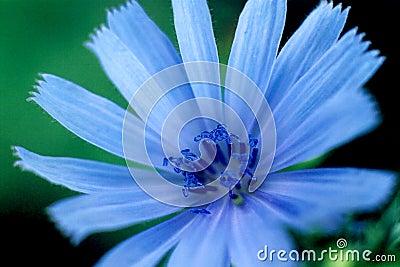 Brillant bleu