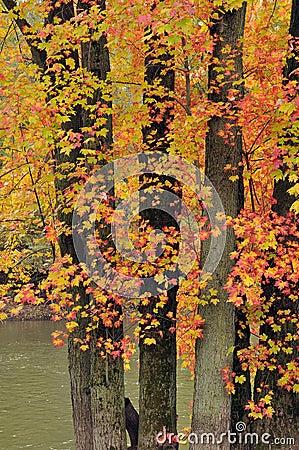 Brilliant colors of autumn