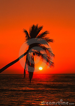 Brilliant Tropical Sunset