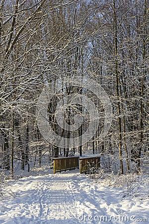 Brindge i snöig skog