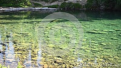 Brise des truites La surface du lac Clear clips vidéos
