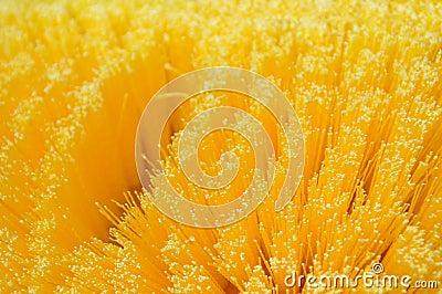 Bristle brush detail