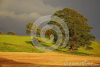 British countryside  - rural landscape