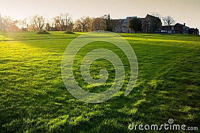 British grass