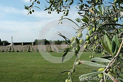 British military memorial and olive tree