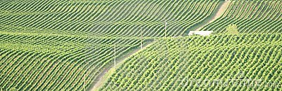 Brittisk columbia okanagan vingård