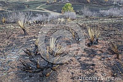 Den brända löpelden landskap