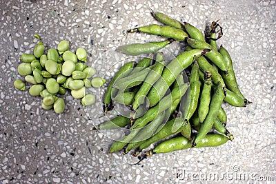 Broad bean, faba bean