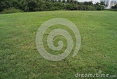 Broad lawn
