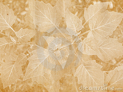 Broad Leaf Imprint