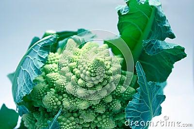 Broccoflower Stock Photo