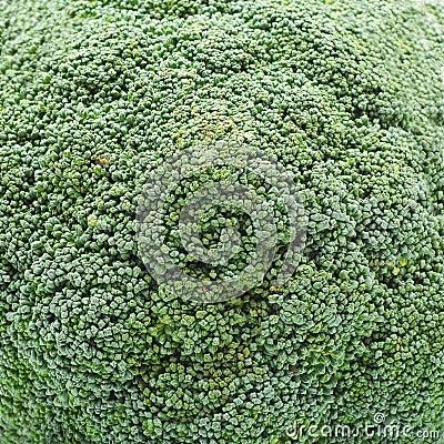 Free Broccoli Stock Photography - 23201132