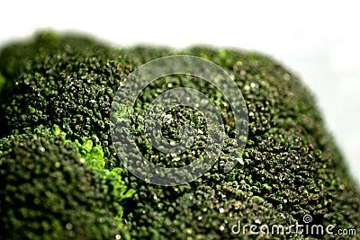 Broccoli 7