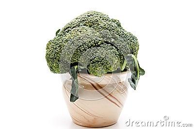 Broccoli in the ceramics pot