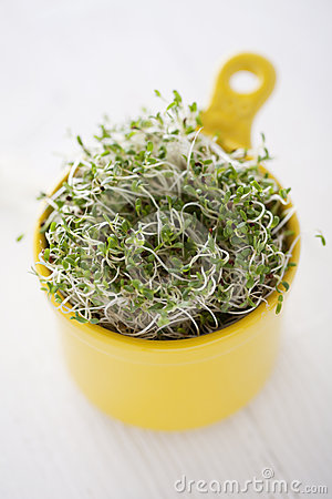 Free Broccoli Sprouts Royalty Free Stock Photography - 24511087