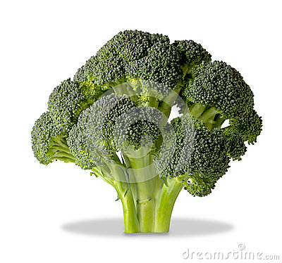 Brocolli tree  on white with clipping path