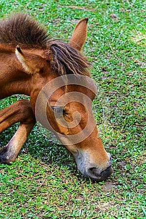 Free Broken Leg Horse Eating Grass Royalty Free Stock Photos - 57482818