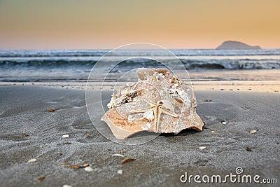 Broken pot on a beach