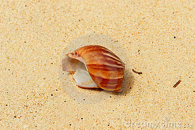 Broken shell in the sand