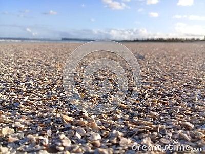 Broken shells on the beach Stock Photo