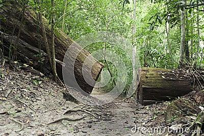 Broken tree on the trail