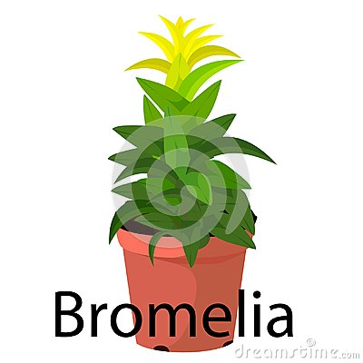 Free Bromelia Pot For Flowers, With Earth, Pink, For Seedlings, Pots. Royalty Free Stock Photo - 122349985