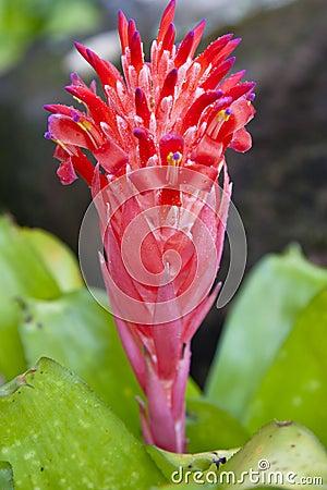 Bromeliad in garden