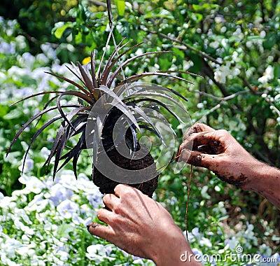Bromeliad Orchid Gardening