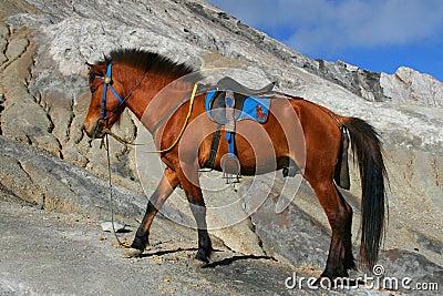 Bromo Horse