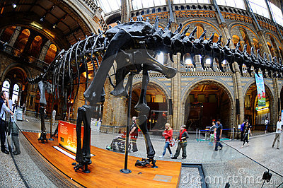 The Brontosaurus skeleton, the hub of the museum Editorial Stock Photo
