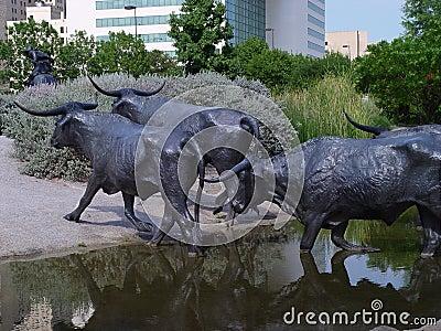 Bronze Long Horn Cattle