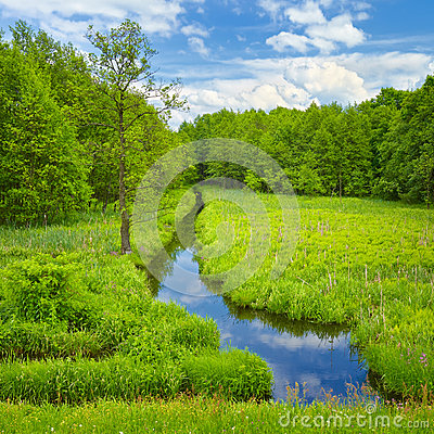 Free Brook And Meadow And Forest. Royalty Free Stock Photos - 31282138