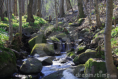 Brook in a forest