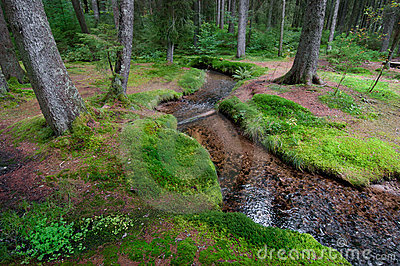 Brook in forest with moos