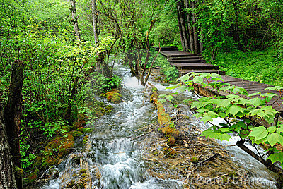 A Brook into Forests