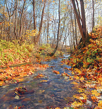 Free Brook In Autumn Forest Royalty Free Stock Images - 10810459