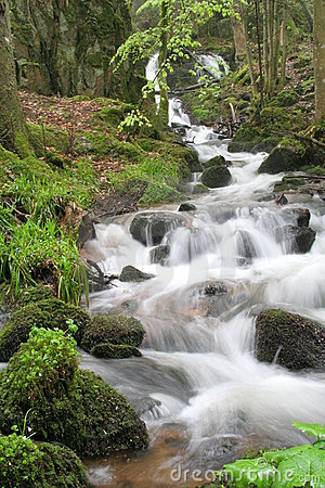 Free Brook In Forest Stock Image - 755461
