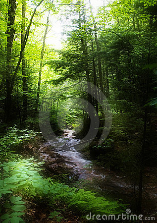 Free Brook In The Forest Royalty Free Stock Photography - 2926447