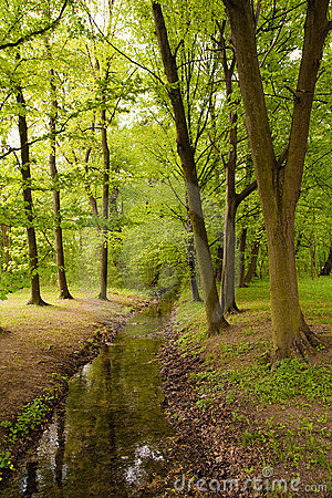Brook between trees