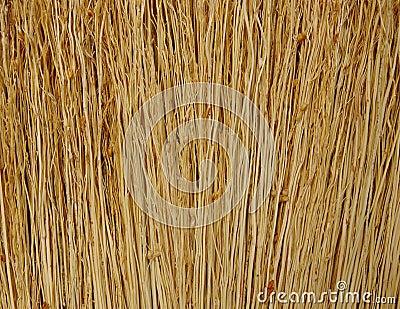 Broom close up