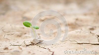 Brote verde en superficie seca árida de la tierra Fondo ecológico del concepto del problema del cambio de clima 4K tailandia metrajes